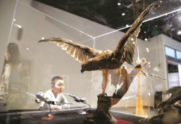 上海自然博物馆通过大量仿生设计案例展示-深圳展览设计